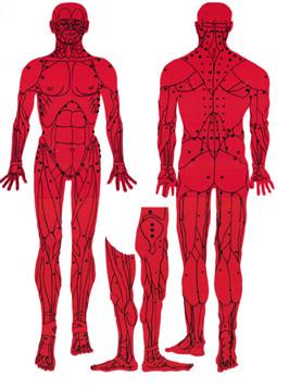 4 Acupressure Sujok Reflexology treatment Nashik